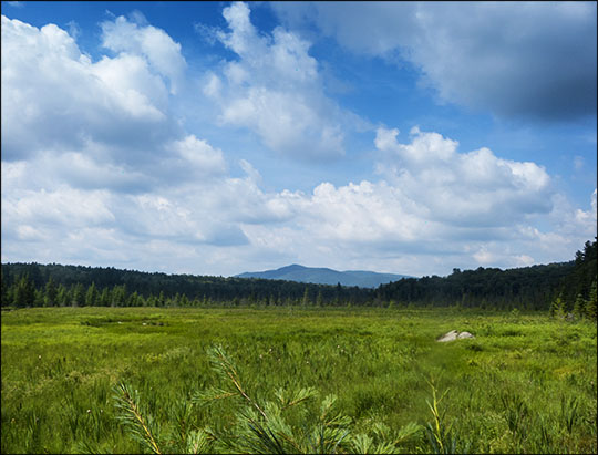 Adirondack Wetlands: Heron Marsh and Saint Regis Mountain (18 July 2013)