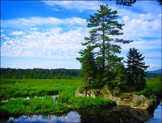 Adirondack Wetlands:  Heron Marsh from the Barnum Brook Trail overlook (21 July 2012)