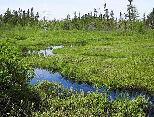 Adirondack Wetlands: Boreal bog along the Bloomingdale Bog Trail (4 June 2011)