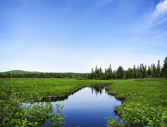 Adirondack Wetlands: Twobridge Brook on the Bloomingdale Bog Trail (4 June 2011)