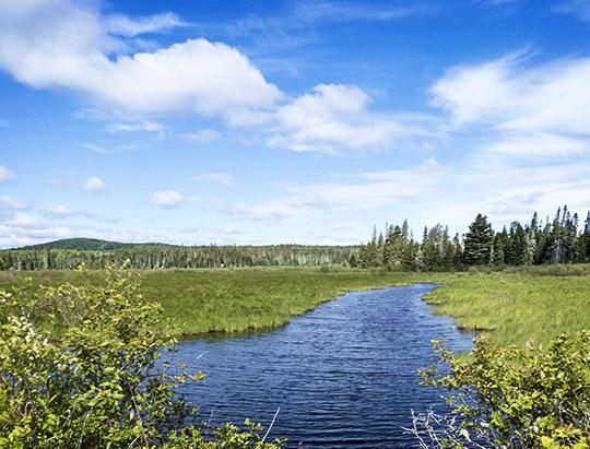 Adirondack Wetlands: Twobridge Brook on the Bloomingdale Bog Trail (3 June 2017)