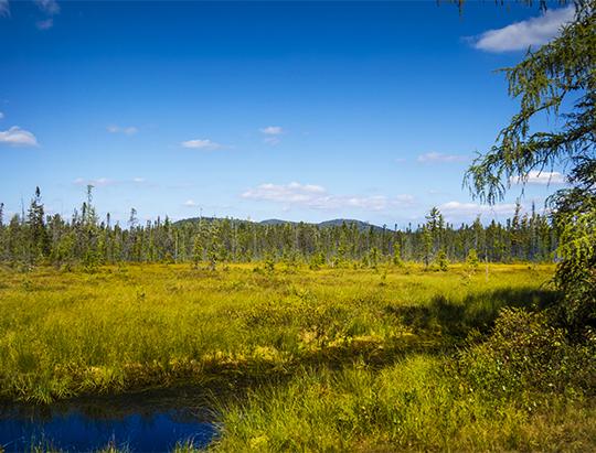Adirondack Wetlands: Twobridge Brook on the Bloomingdale Bog Trail (18 September 2015)