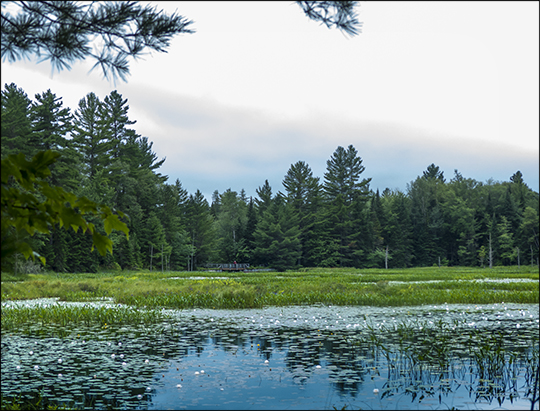 Adirondack Wetlands:  Heron Marsh from the Bobcat Trail (31 July 2013)