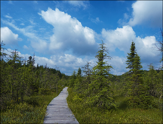 Adirondack Wetlands:  Boardwalk through Barnum Bog (18 July 2013)
