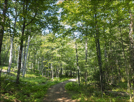 Adirondack Habitats: Deciduous forest on the Easy Street Trail (19 August 2013)