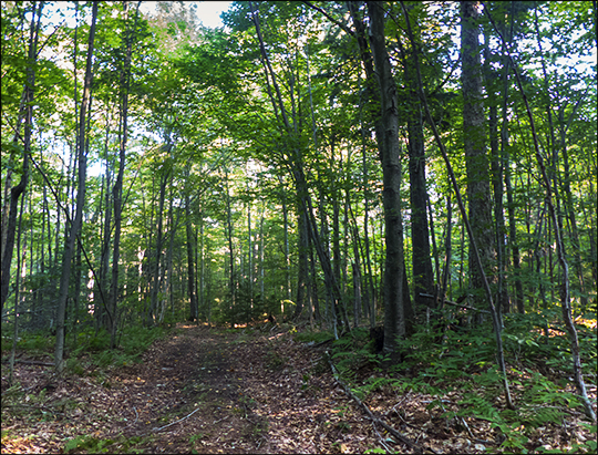 Adirondack Habitats: Hardwoods on the Fox Run Trail (21 August 2013)