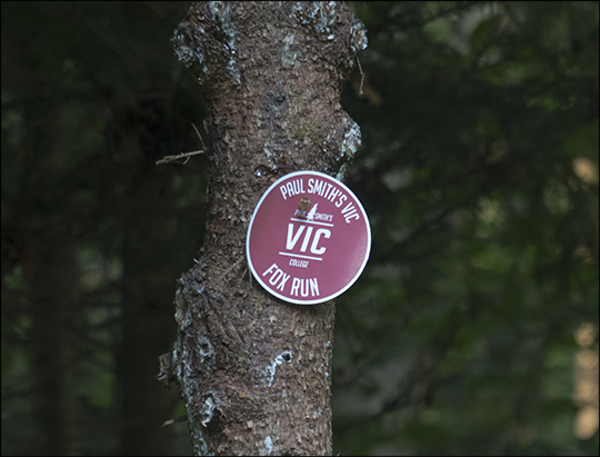 Red trail marker along the Fox Run Trail (21 August 2013)