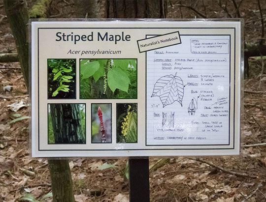Adirondack Trees: Interpretive Sign on the ADK Tree Trail at Heart Lake (28 June 2017)