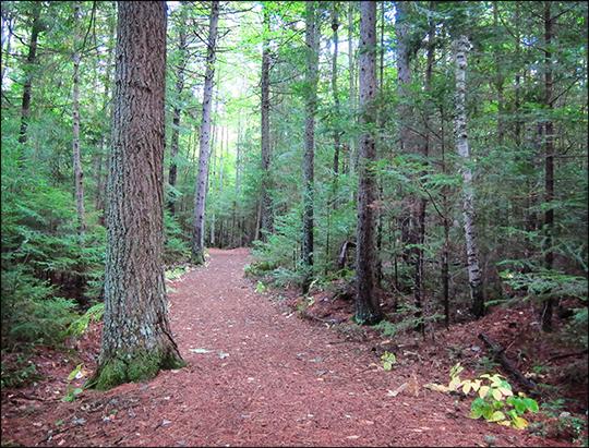 Adirondack Habitats:  Mixed forest along the Heron Marsh Trail (19 September 2012)