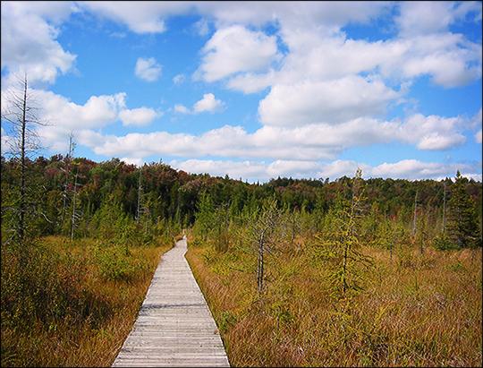 Adirondack Wetlands:  Heron Marsh boardwalk (19 September 2004)