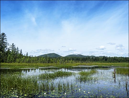 Adirondack Wetlands: Heron Marsh from the second overlook (12 July 2013)