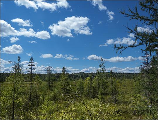 Adirondack Wetlands: Heron Marsh from the overlook (12 August 2013)