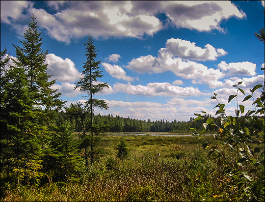 Adirondack Wetlands: Heron Marsh from the overlook (19 September 2004)