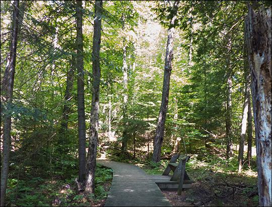Adirondack Habitats: Mixed forest on the Jenkins Mountain Trail (12 August 2013)