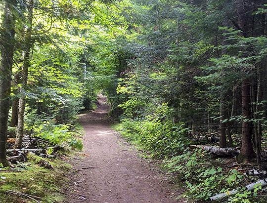 Adirondack Habitats: Mixed Woods on the Potato Field Loop at John Brown Farm (27 Septmber 2015)