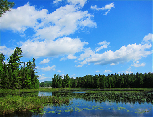 Adirondack Wetlands: Heron Marsh from the Logger's Loop Trail (30 May 2012)