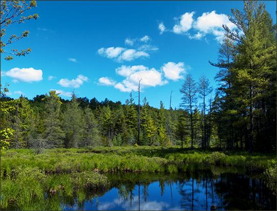 Adirondack Wetlands: Marsh near Barnum Brook on the Logger's Loop Trail (15 June 2013)