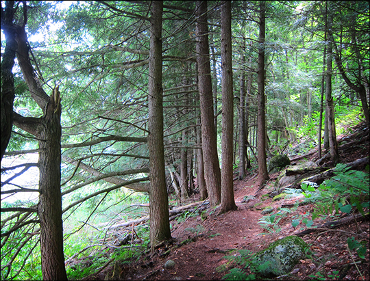 Adirondack Habitats: Mixed forest on the Long Pond Trail (16 August 2012)