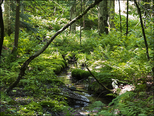 Adirondack Habitats:  Brook along the Woods and Waters Trail